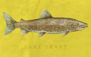 Lake Trout by John Golden