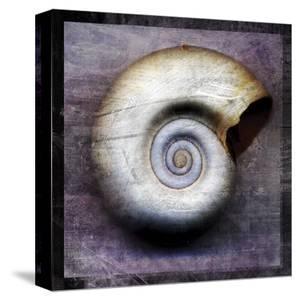 Moon Snail by John Golden
