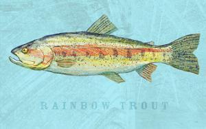 Rainbow Trout by John Golden