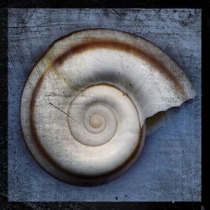 Snail by John Golden
