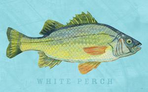 White Perch by John Golden