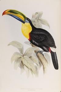 A Monograph of the Ramphastidae, or Family of Toucans, First Edition, Published 1834 by John Gould