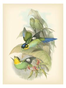 Birds of the Tropics I by John Gould