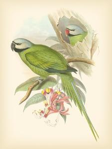 Gould Birds of the Tropics II by John Gould