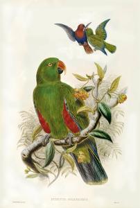 Gould Parrots I by John Gould