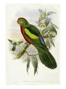 Gould Parrots II by John Gould