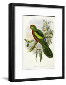 Gould Parrots II by John Gould