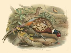 Pheasants I by John Gould