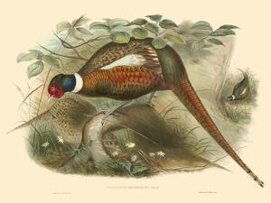 Pheasants II by John Gould