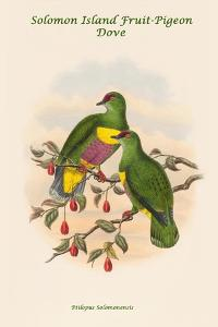 Ptilopus Solomonensis - Solomon Island Fruit-Pigeon - Dove by John Gould