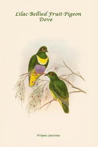 Ptilopus Speciosus - Lilac-Bellied Fruit-Pigeon - Dove by John Gould