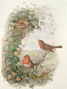 Robin, 1873 by John Gould