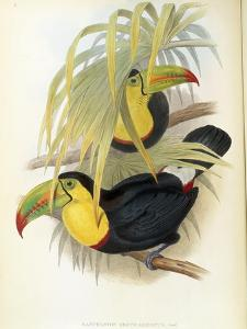Short-Billed Toucan by John Gould