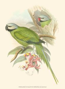 Small Birds of Tropics II by John Gould