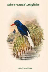 Tanysiptera Carolinae - Blue-Breatsed Kingfisher by John Gould