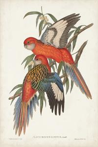 Tropical Parrots I by John Gould