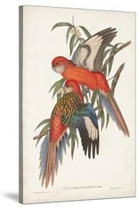 Tropical Parrots I by John Gould