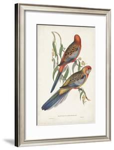 Tropical Parrots II by John Gould