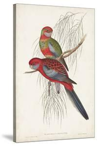 Tropical Parrots III by John Gould
