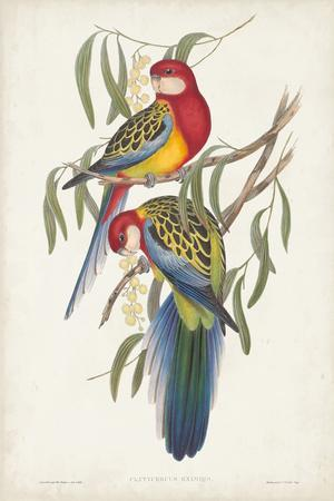 Tropical Parrots IV