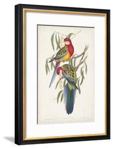 Tropical Parrots IV by John Gould