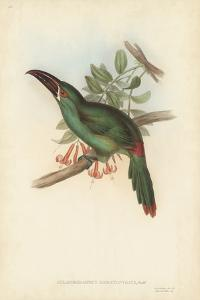 Tropical Toucans II by John Gould