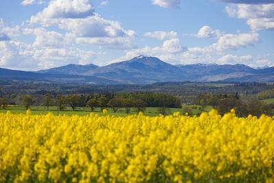View of Perthshire Mountains and Rape field (Brassica napus) in foreground, Scotland, United Kingdo
