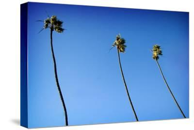3 Palms
