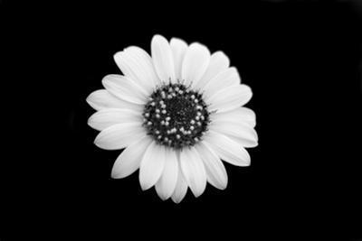 Mono Flora