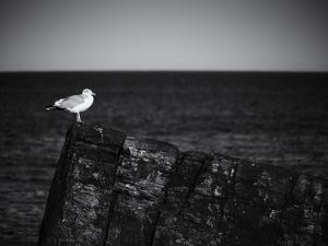 Sea Gull by John Gusky
