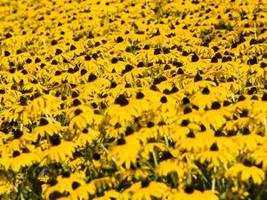 Yellowness by John Gusky