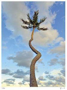 Curving Palm by John Gynell