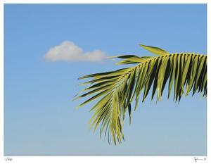 Palm Cloud Islamorada by John Gynell