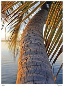 Sunset Palm Islamorada by John Gynell