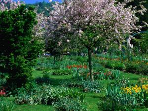 Blossom Tree at Monet's Garden Giverny, Haute-Normandy, France by John Hay