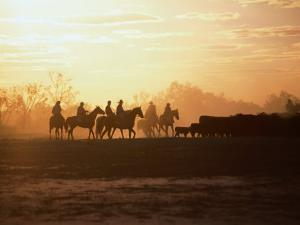 Silhouette of Stockman and Cattle,South Australia, Australia by John Hay
