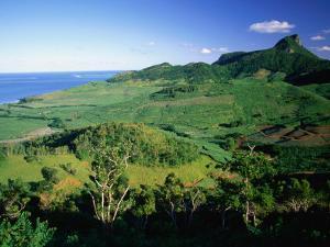 Tea Plantations, Mauritius by John Hay