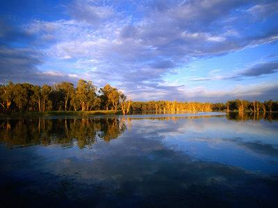 Trees on River Banks Reflected in Slow Moving Waters of Murray River, Victoria, Australia