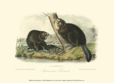 American Beaver by John James Audubon