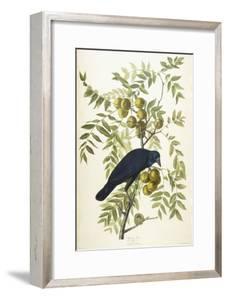 American Crow, 1833 by John James Audubon
