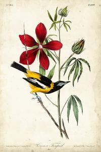 Audubon Bird & Botanical I by John James Audubon