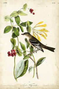 Audubon Bird & Botanical II by John James Audubon