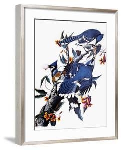 Audubon: Blue Jay by John James Audubon