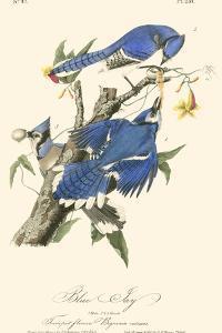 Audubon Blue Jays by John James Audubon