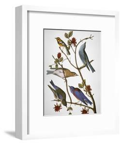 Audubon: Bluebirds by John James Audubon