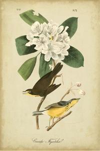 Audubon Canada Flycatcher by John James Audubon