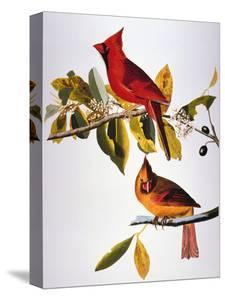 Audubon: Cardinal by John James Audubon