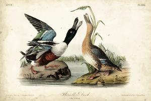 Audubon Ducks I by John James Audubon