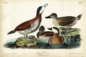 Audubon Ducks II by John James Audubon