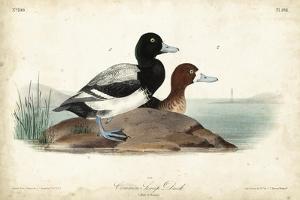 Audubon Ducks III by John James Audubon